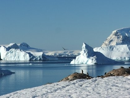 Enjoy the stunning landscapes and exotic wildlife of Antarctica