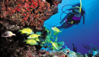Snorkel and dive in the clear waters of the Caribbean