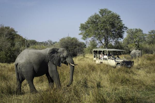 Enjoy viewing elephants on your African safari.