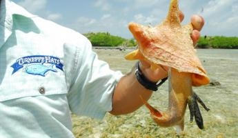 Finding sea life at Turneffe Flats