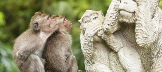 Two monkeys admire the statues