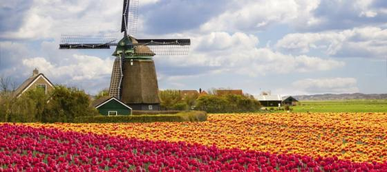 Take a tour to see the beautiful fields of tulips