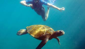 Snorkel with wildlife on your Galapagos cruise