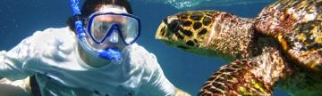 Snorkel with sea turtles