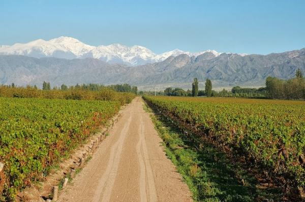 Driving amongst the expansive vineyards around Mendoza