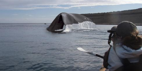 Sea kayak with whales on Peninsula Valdes