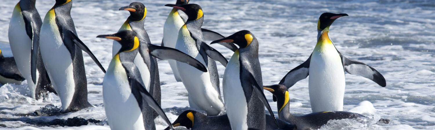 Penguins in the antarctic.
