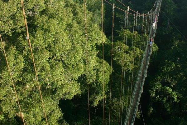 Sacha Lodge rainforest canopy walk