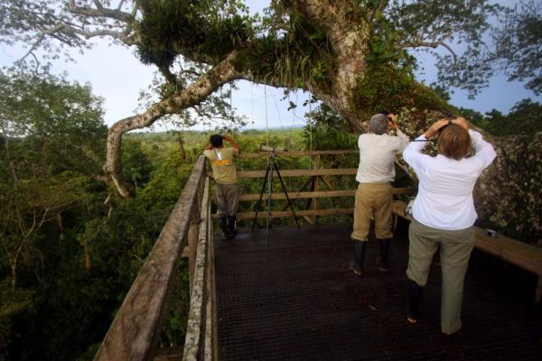 Watch for wildlife in the rainforest canopy at Sacha Lodge