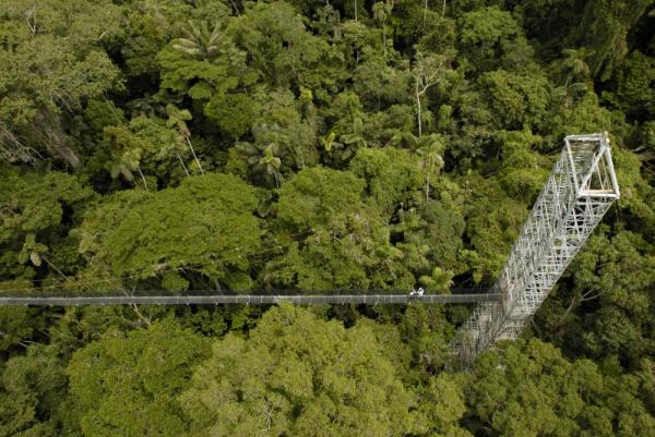 Enjoy the Sacha Lodge rainforest canopy observation deck and walkway