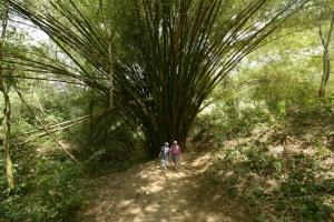 Explore the Chaa Creek Nature Preserve on foot