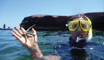Collected a starfish while snorkeling.