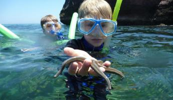 Kid finds a starfish while snorkeling.