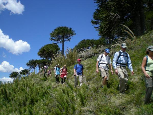 Hiking in Alerce Andino National Park