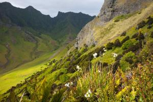 Explore the lush landscapes of Robinson Crusoe Island