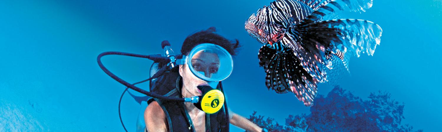 Lionfish swimming around a diver.