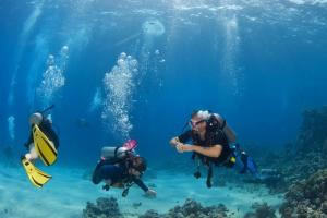 Scuba diving in the reefs