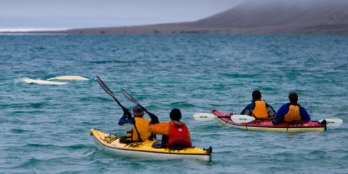 Sea kayak with beluga whales during your stay at Arctic Watch Wilderness Lodge