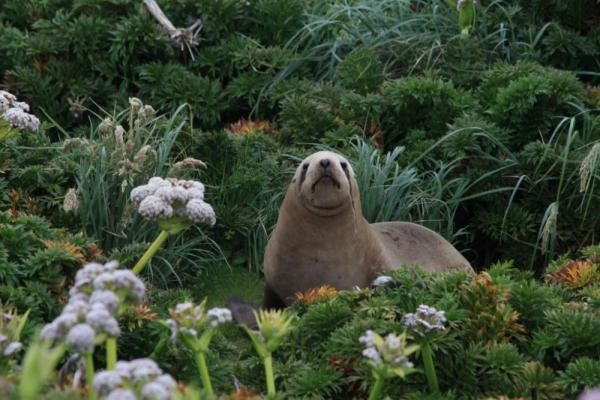 Seal hides amongst the unique plant life.