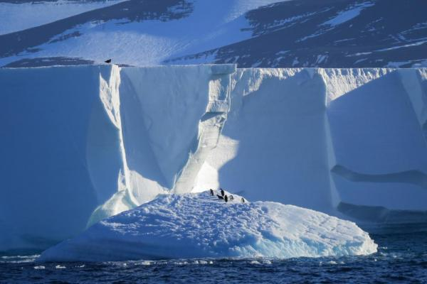 Penguins walking around on icebergs.