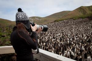 Photographing a colony of penguins.