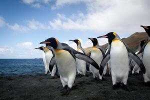 Penguins freely roam the islands.