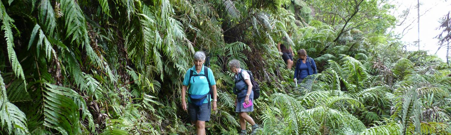Travelers hiking through the tropical environment.