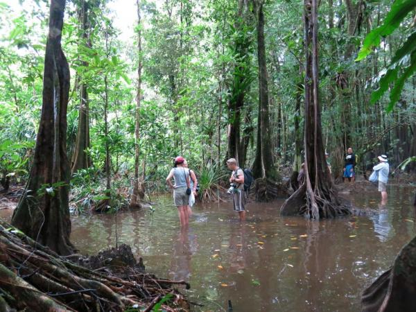 Wandering through the swampy forests of Melanesia.