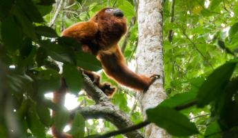Magnificent wildlife of the Amazon