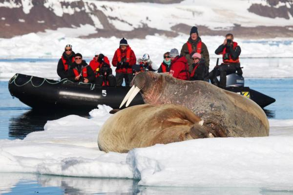 Zodiac tour to see an arctic walrus.