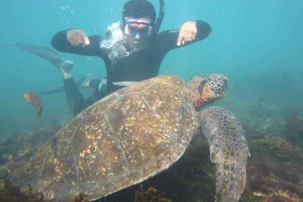 Snorkel with sea turtles during your stay at Floreana Lodge