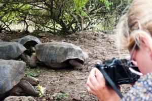 Traveler taking a photo of giant turtles.