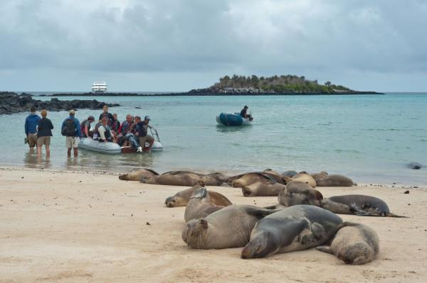 Sea lions resting on the beach with travels watching in zodiacs.
