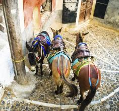 Donkeys are a traditional form of transportation in Greece
