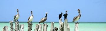 Admire the locals on your Virgin Islands cruise