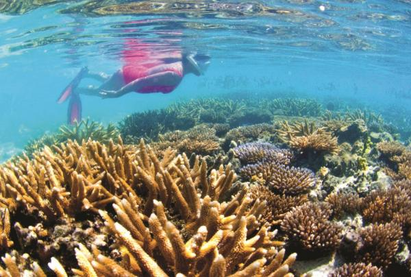 Snorkel the tropical reef as you sail the Asian Pacific