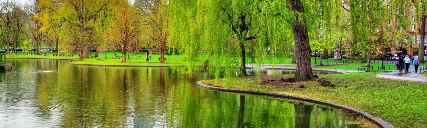 Take a stroll through Boston's Public Garden.