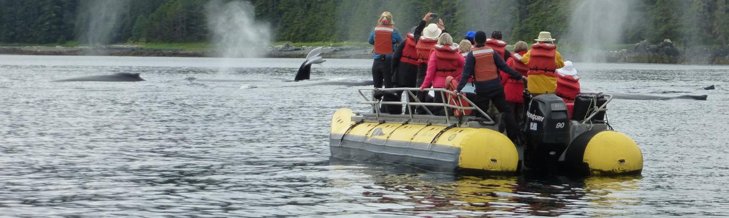Whale watching from a zodiac in Alaska.