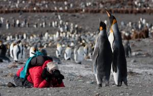 Photographing Penguins in South Georgia.
