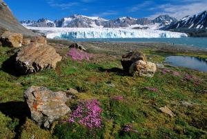 Glaciers and beautiful arctic tundra.