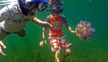 Snorkel with fascinating sea life while staying at Tranquilo Bay Lodge