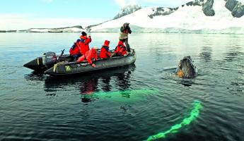 Take a zodiac trip to view Humpback Whales.