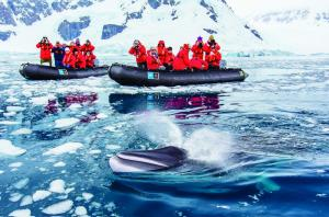 Travelers catching a glimpse of a Minke Whale on a zodiac trip.