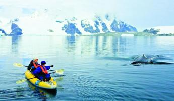 Kayaking around Humpback Whales.
