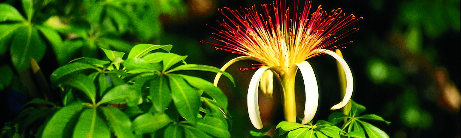 Witness the beautiful and unique flowers of Central America.