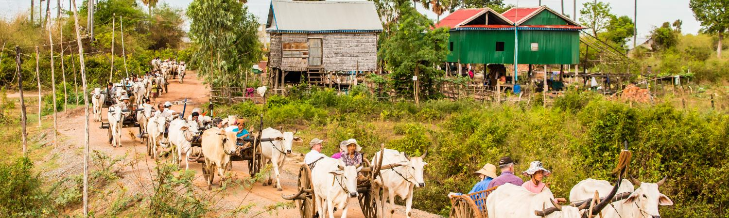 Locals moving in carts pulled by cattle in Cambodia.