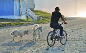 Local biking with his dogs at his side.