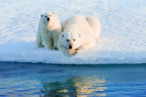 A polar bear and her cub relaxing in the ice.