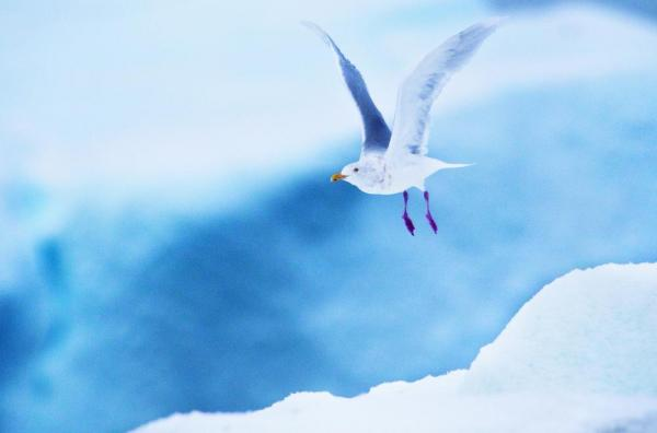 Enjoy watching local bird life on your arctic adventure.