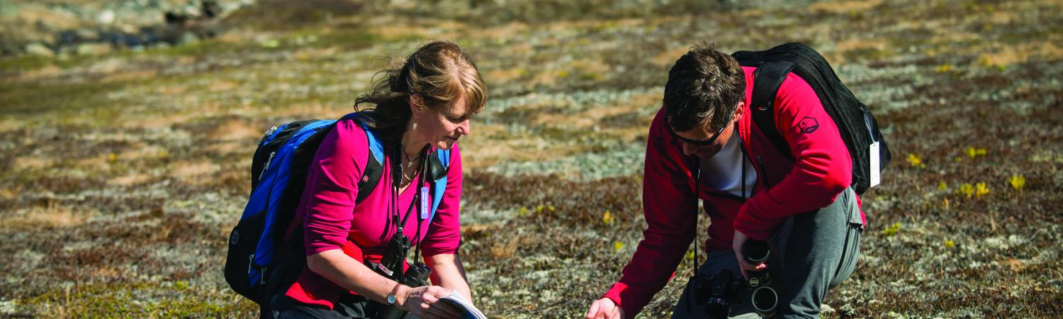 Travelers studing local plants in the tundra.